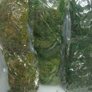 Green moss sold per packet